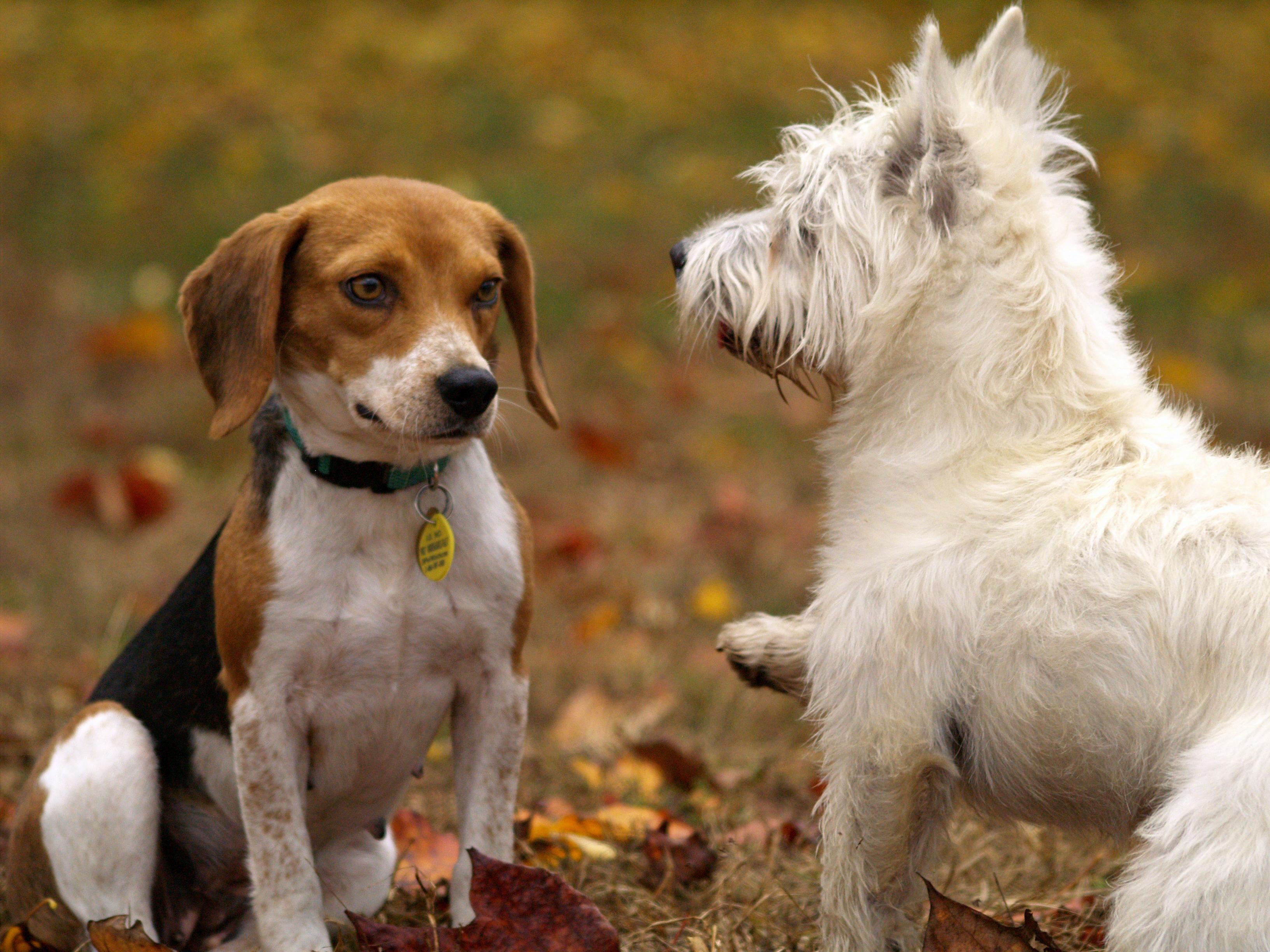 due cani interagiscono amichevolmente all'aperto
