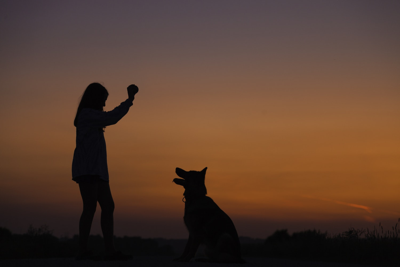 bambina e cane giocano al tramonto con pallina