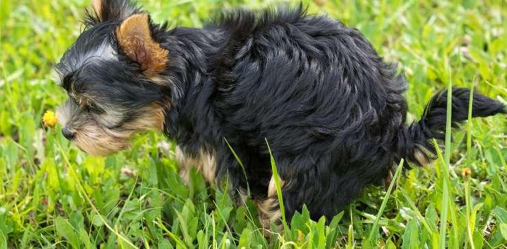Bisogni fisologici dei cuccioli