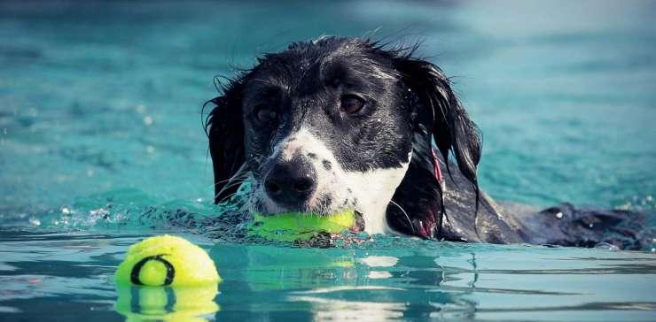 L'educazione motoria in piscina
