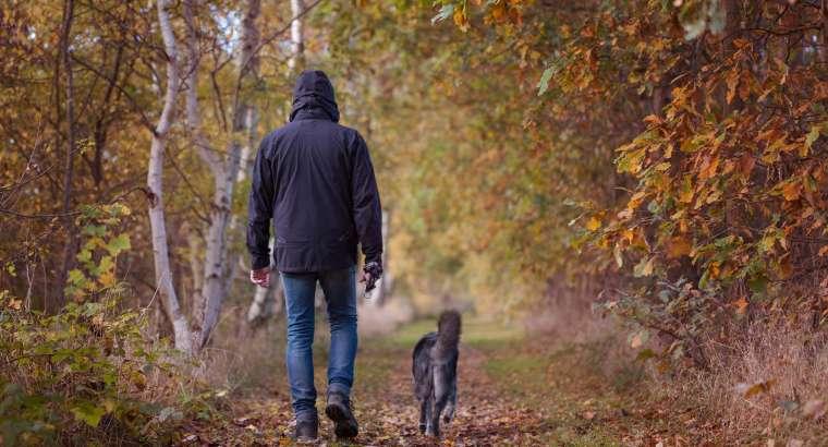 Passeggiate Naturalistiche a 6 Zampe