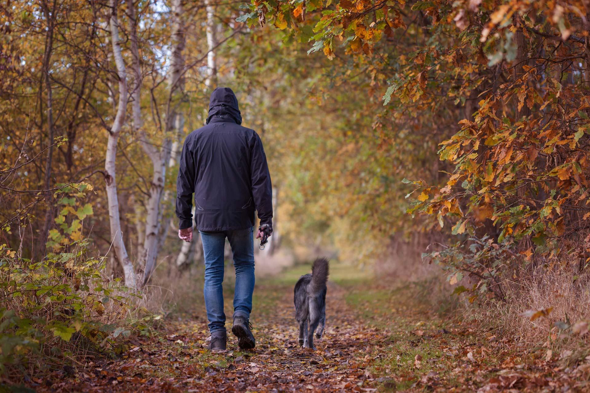 cane passeggia libero con persona nel bosco
