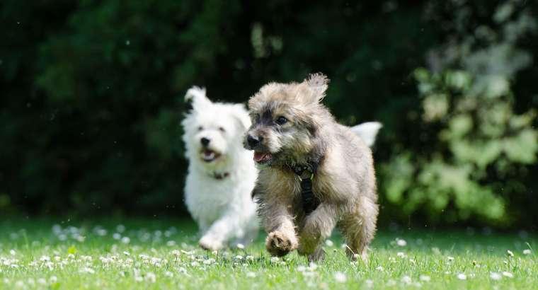 Asilo per Cani & Dog Taxi