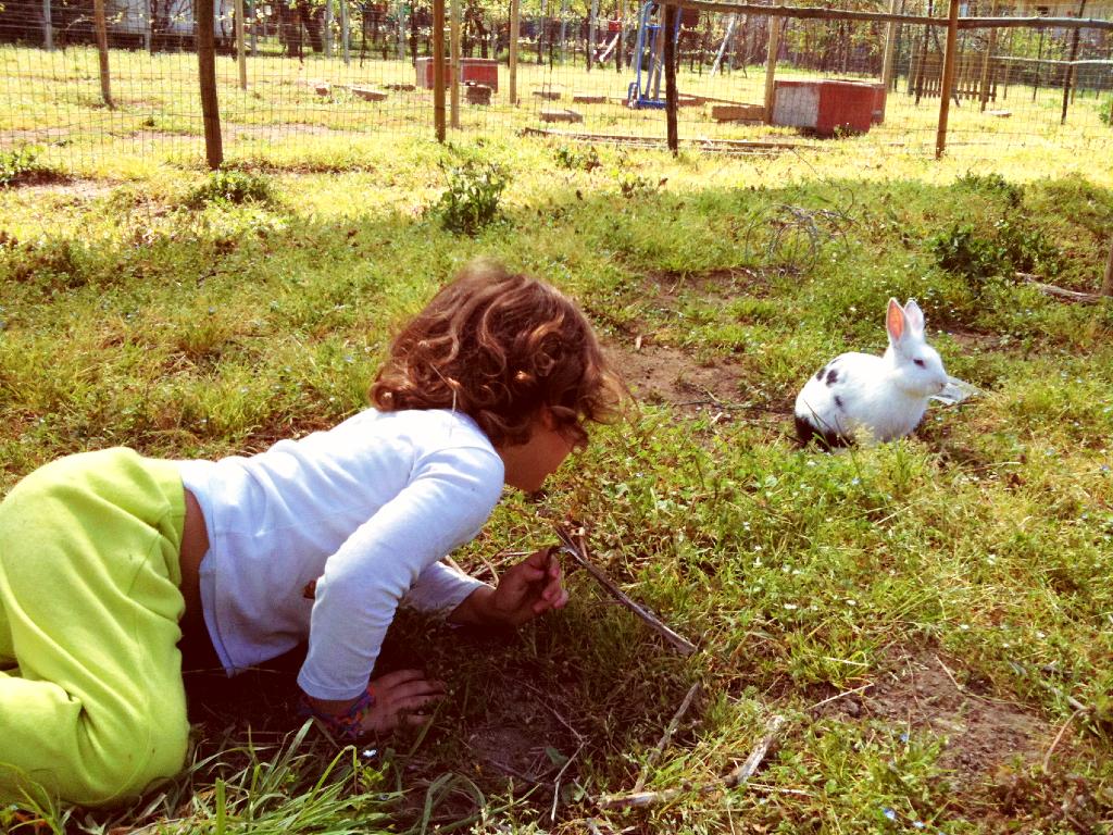 bambino si avvicina a coniglio libero sul prato senza disturbarlo