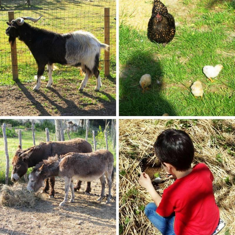 gli animali della fattoria zooantropologica con bambino che studia la natura
