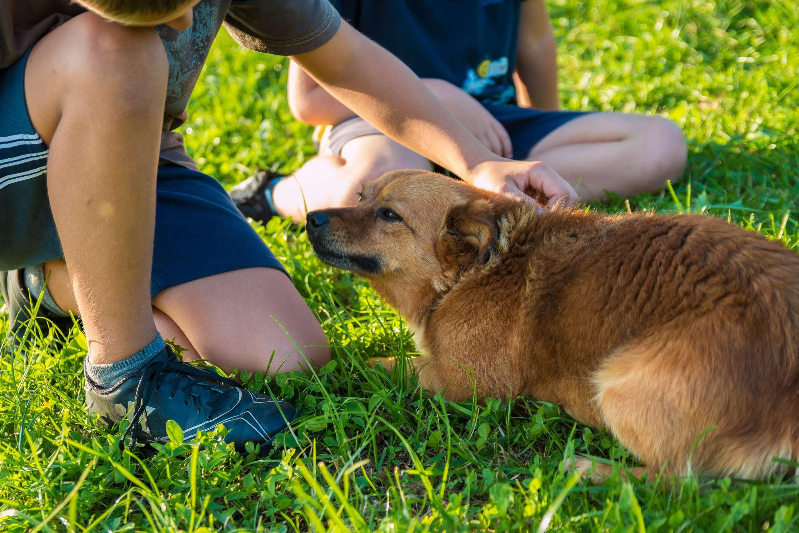 bambini accarezzano cane sul prato